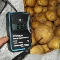 инспекция-овощей-2